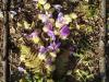 pomladni-c5a1opek-julija